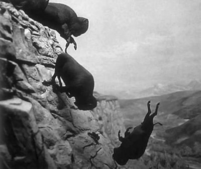bison_over_a_cliff